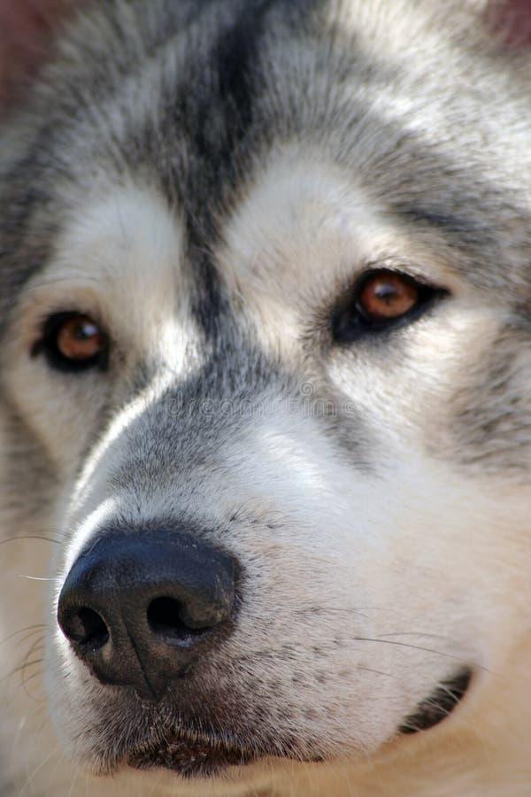 Protetor do cão imagem de stock royalty free