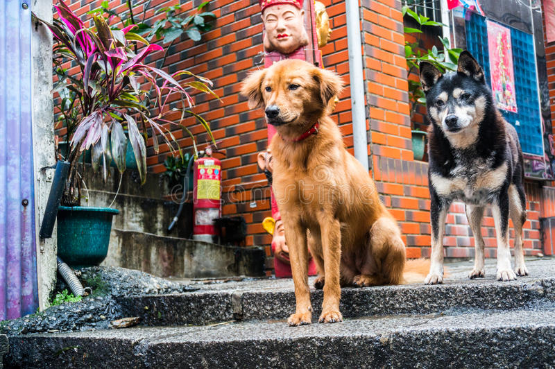 Protetor Dogs imagens de stock royalty free