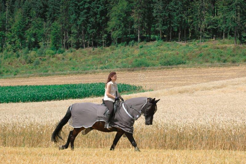 Protezione contro gli insetti per i cavalli. fotografie stock
