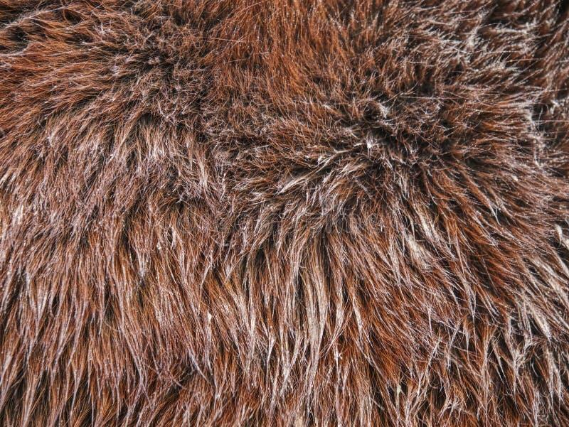 Protezione del corpo del cavallo con pelliccia ruvida spessa immagine stock