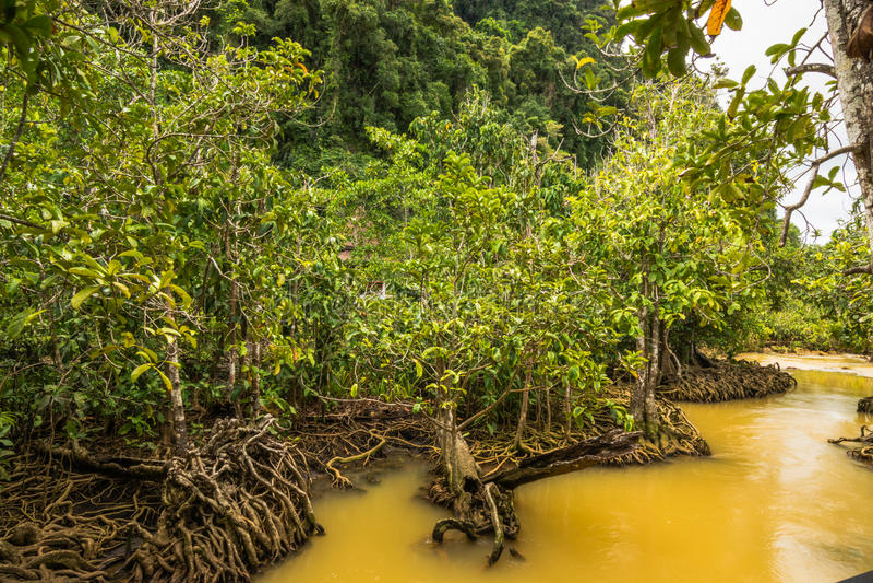 Protezione forestale e turista di Tha Pom Klong Song Nam Mangrove immagini stock