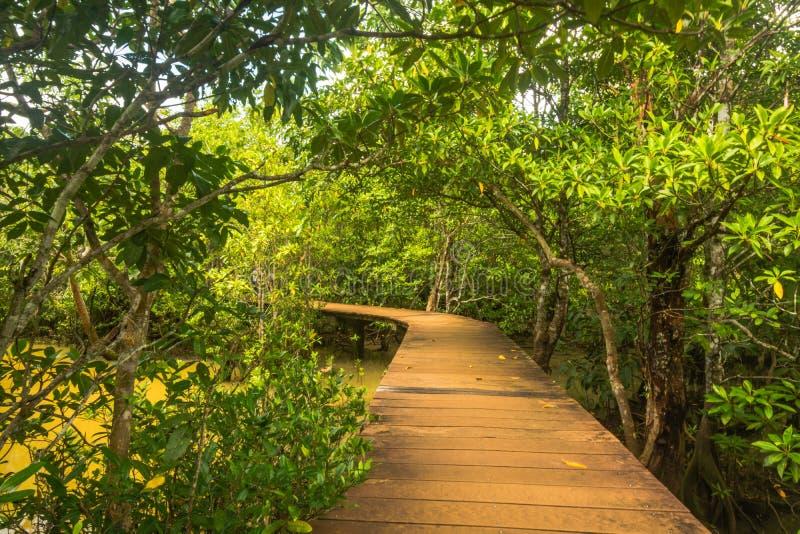 Protezione forestale e turista di Tha Pom Klong Song Nam Mangrove fotografie stock libere da diritti