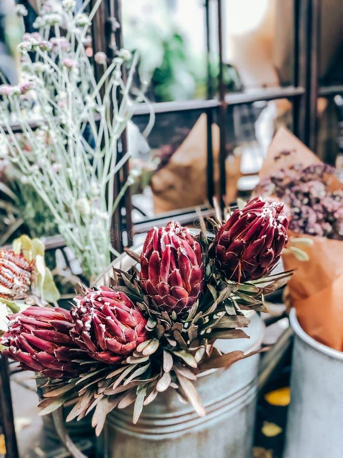 Protheembloemen en -planten in de kleine bloemenwinkel royalty-vrije stock foto