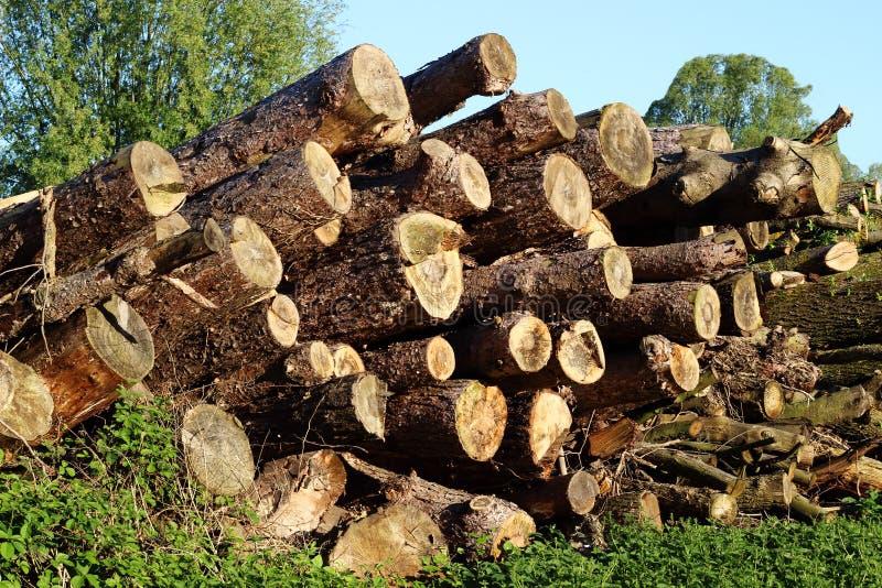 Protokollierungsforstwirtschaft Ein Hügel von hölzernen Klotz, Säge schnitt Baum 2 stockfotografie