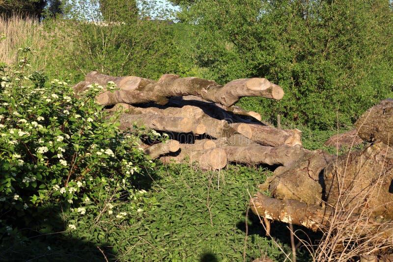 Protokollierungsforstwirtschaft Ein Hügel von hölzernen Klotz, Säge schnitt Baum 3 stockfoto