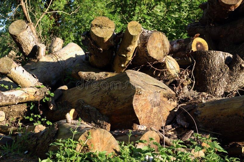 Protokollierungsforstwirtschaft Ein Hügel von hölzernen Klotz, Säge schnitt trees1 lizenzfreies stockbild