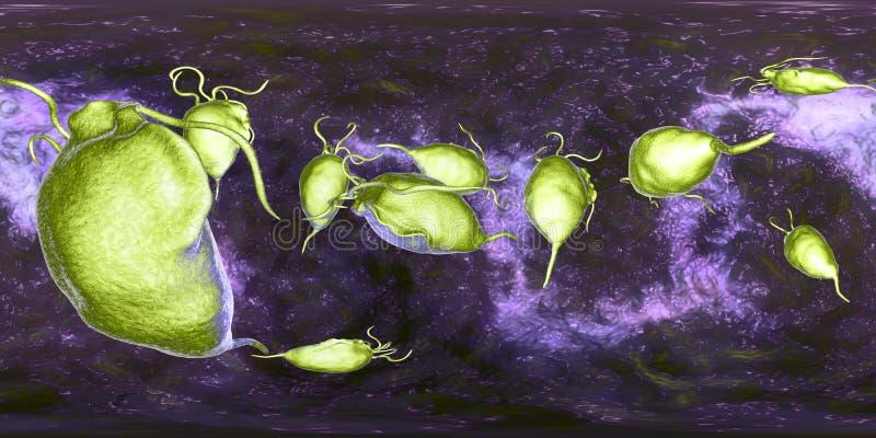 Protozoário dos vaginalis de Trichomonas, opinião de um panorama de 360 graus ilustração royalty free