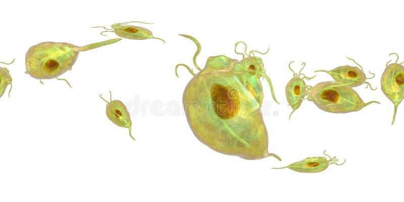 Protozoário dos vaginalis de Trichomonas, um panorama esférico de 360 graus ilustração stock