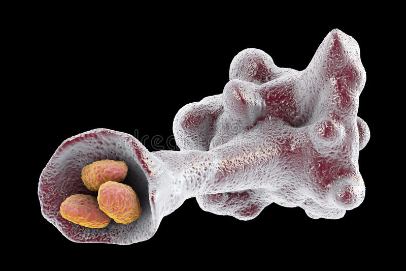 Protozoan d'amibe engloutissant des bactéries illustration libre de droits