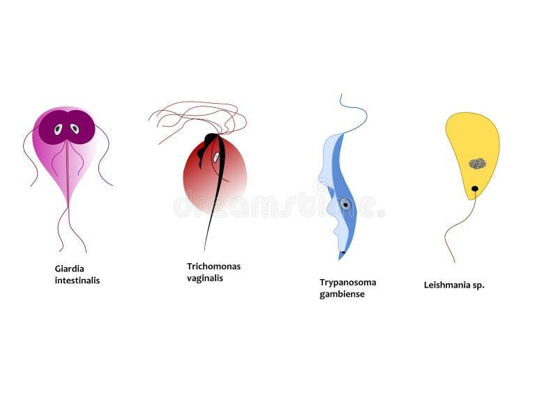 Protozoos que infectan a gente ilustración del vector
