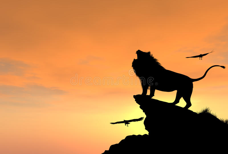 Proud Male Lion on a Rocky Cliff at Sunset royalty free stock image