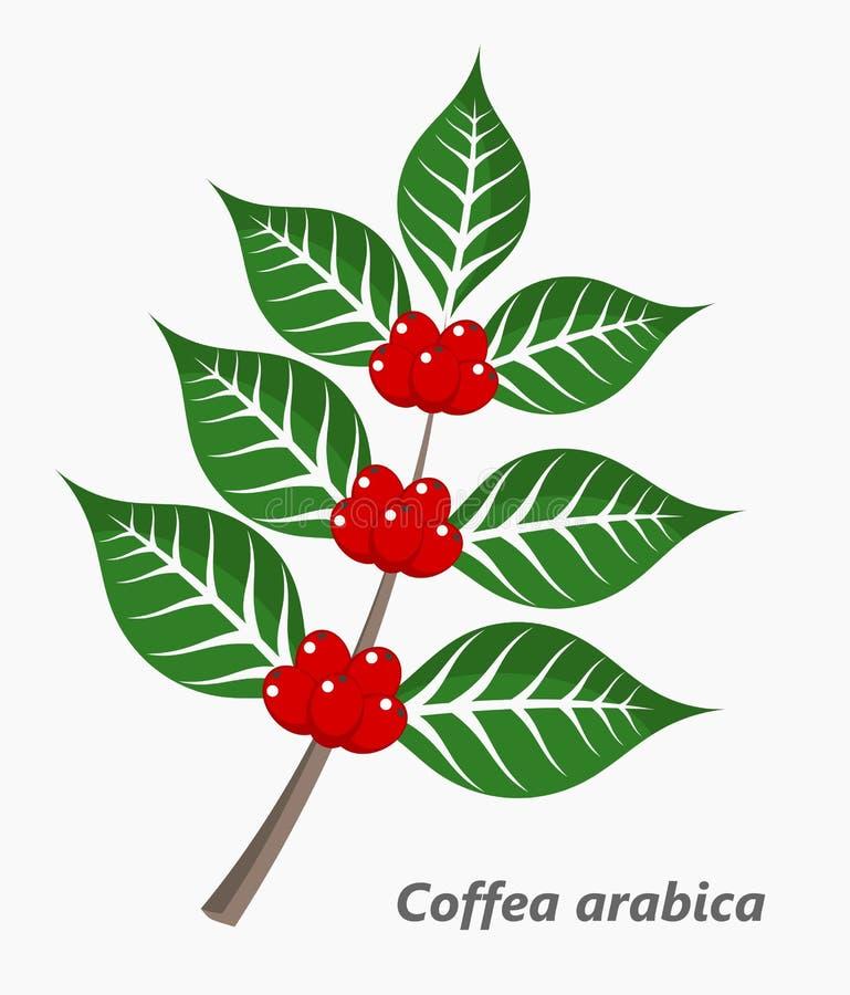 Província do café Plant ilustração do vetor