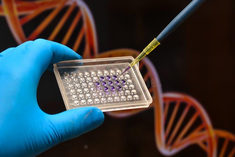 Prova del DNA in un laboratorio scientifico immagine stock libera da diritti