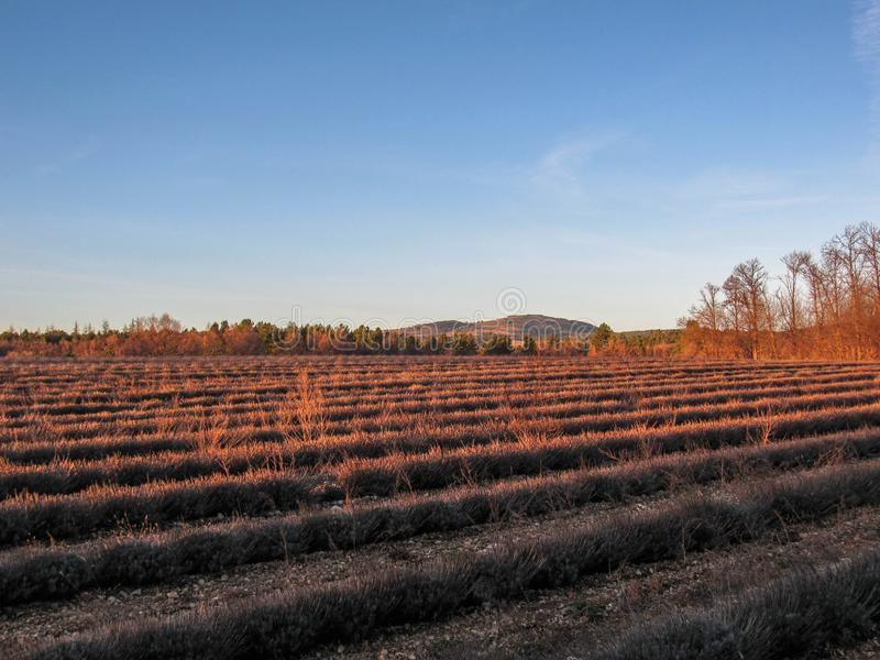 Provancal krajobraz przy zmierzchem z Lavander w zimie, Provence, Południowy Francja fotografia stock