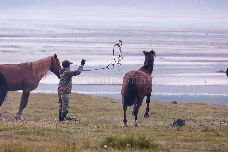 Prove dell'uomo per prendere il cavallo fotografie stock libere da diritti