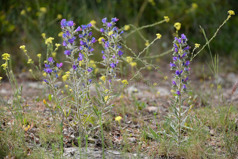 Provencal flowers. In the South of France, by a sunny springtime day stock photo