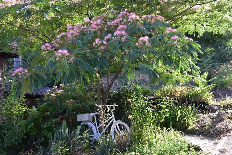 Village garden with exotic plants. There are the tree with pink flowers, a lot of different plants and a bicycle in the summer village garden stock images