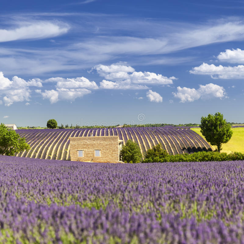 Provencal hus bland lavendelfälten royaltyfri foto