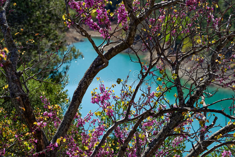 provencal krajobrazu obrazy stock