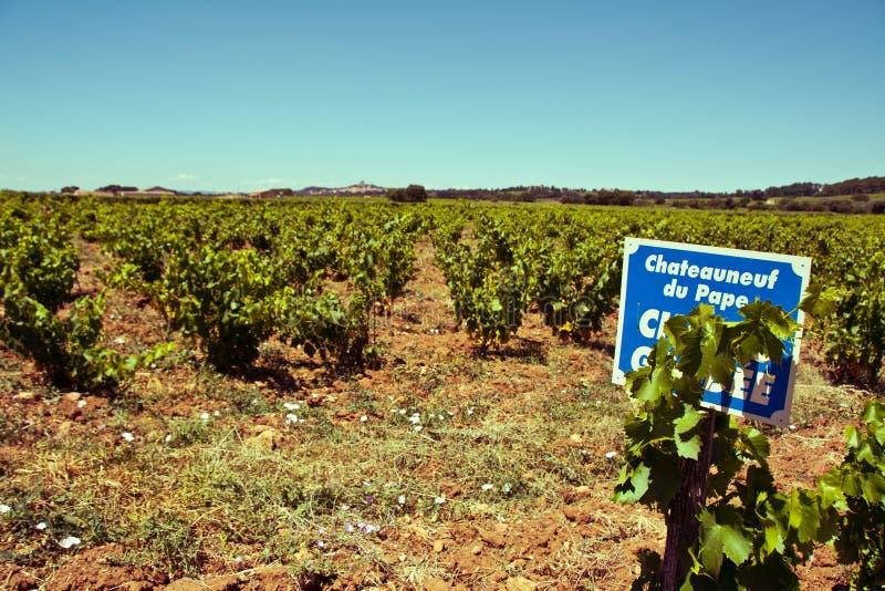 Provencal vineyard stock photo