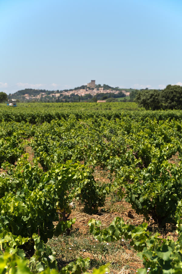 Provencal vineyard. Vineyards at Chateauneuf du Pape, Provence, France (selective focus royalty free stock images