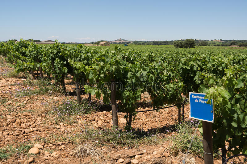 Provencal vineyard. Vineyards at Chateauneuf du Pape, Provence, France (selective focus royalty free stock photo