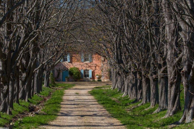 Provence aleja zdjęcie royalty free