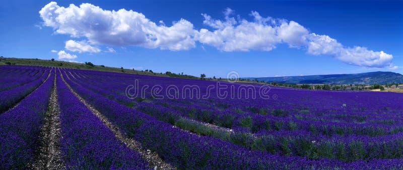 Provence - campo da alfazema foto de stock royalty free