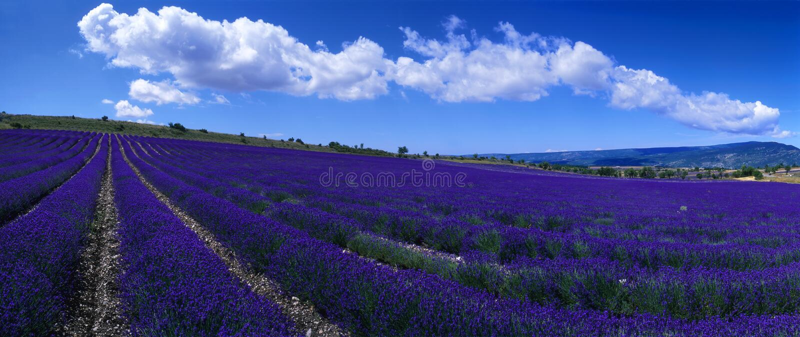 Provence - campo de la lavanda foto de archivo libre de regalías