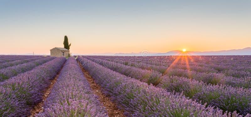 Provence, França, platô de Valensole com campo roxo da alfazema imagens de stock royalty free