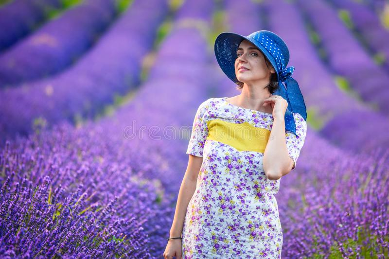 Valensole lavender in Provence, France royalty free stock images