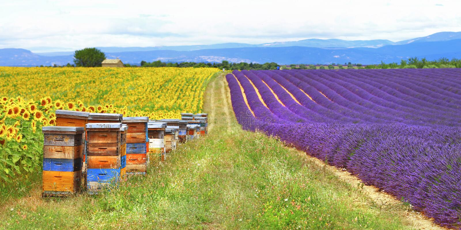 Provence, France , countryside. Provence, France - feelds of lavader and sunflowers with beehive stock photo