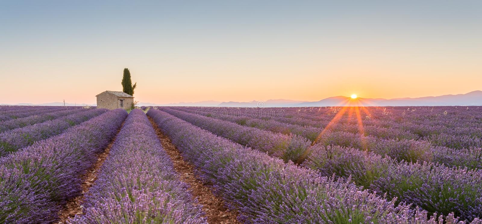 Provence, France, Valensole Plateau with purple lavender field royalty free stock images