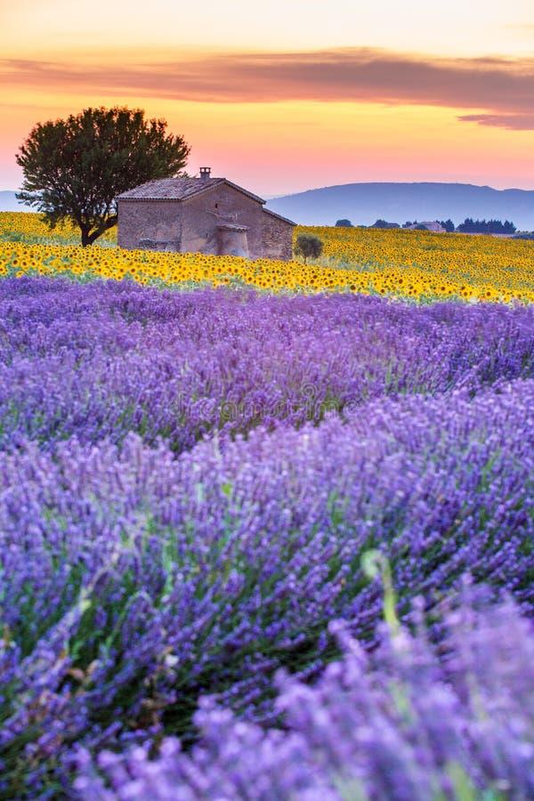 Provence, Frankreich, Valensole-Hochebene mit purpurrotem Lavendelfeld stockfotografie
