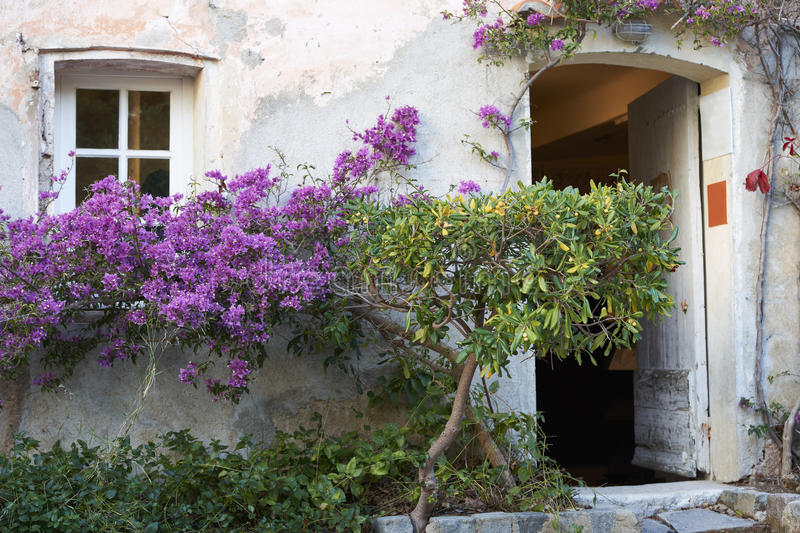 Download Provence House With Flowers Stock Photo - Image: 37488960