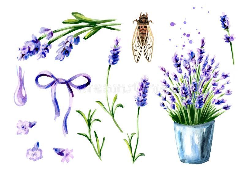 Provence Lavender summer set. Watercolor hand drawn vertical illustration, isolated on white background. Provence Lavender summer set. Watercolor hand drawn royalty free stock photos