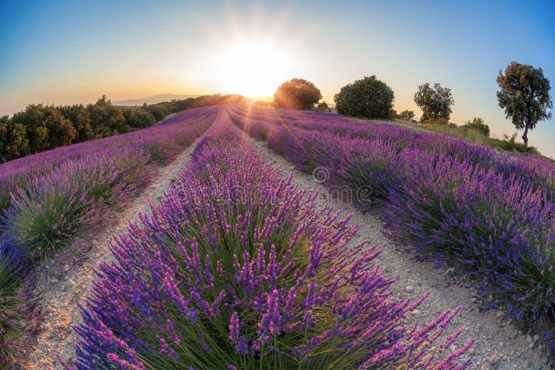 Provence mit Lavendelfeld bei Sonnenuntergang, Valensole-Hochebenenbereich im Süden von Frankreich lizenzfreie stockfotos