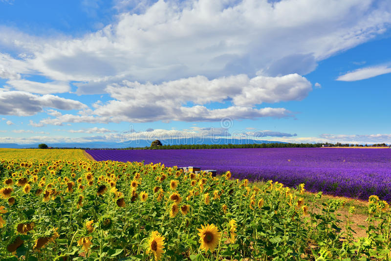 Provence rural landscape, France stock photos
