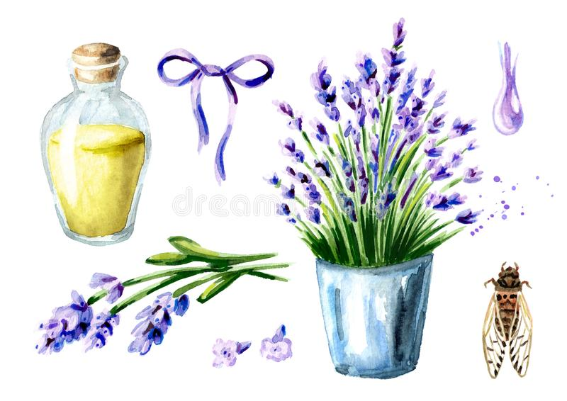 Provence summer and Lavender set. Watercolor hand drawn vertical illustration, isolated on white background. stock photo