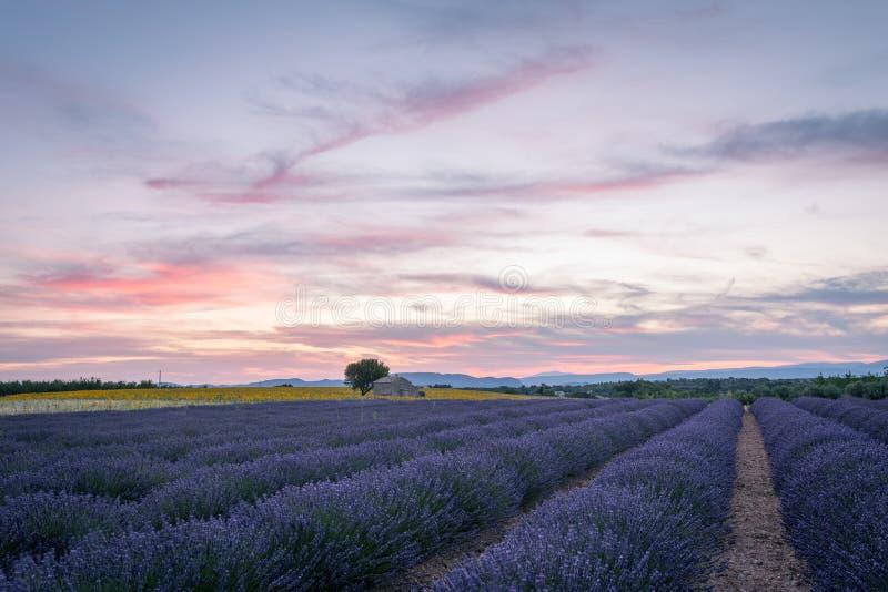 Provence, Valensole Plateau stock photo