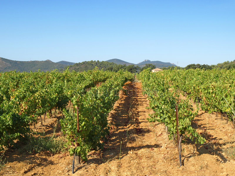 Provence vineyards. An image of vineyards in Provence country royalty free stock photography