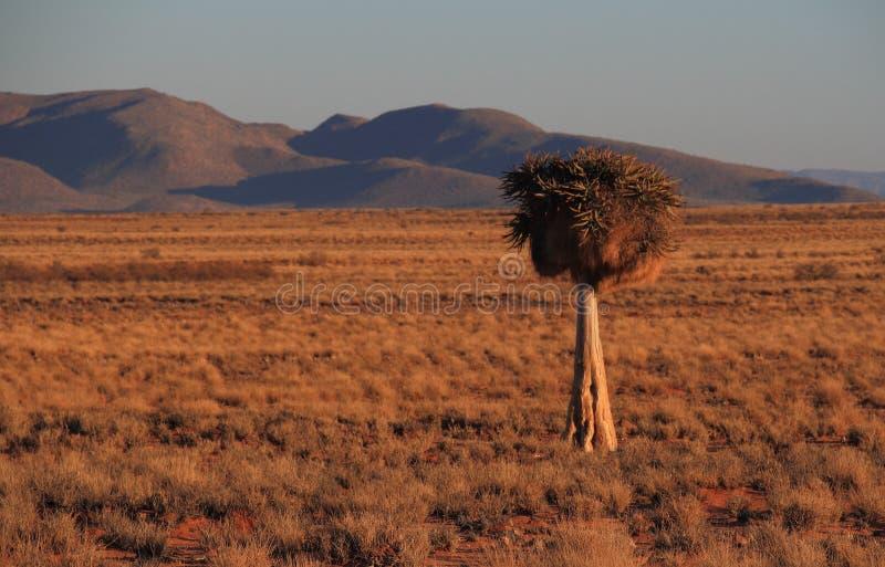 Province de Namaqualand le Cap-du-Nord de paysage de l'Afrique du Sud photos libres de droits