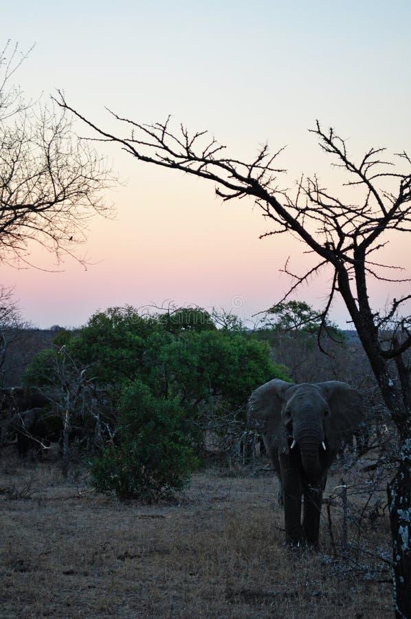 Province del parco nazionale, del Limpopo e di Mpumalanga di Kruger, Sudafrica immagini stock libere da diritti