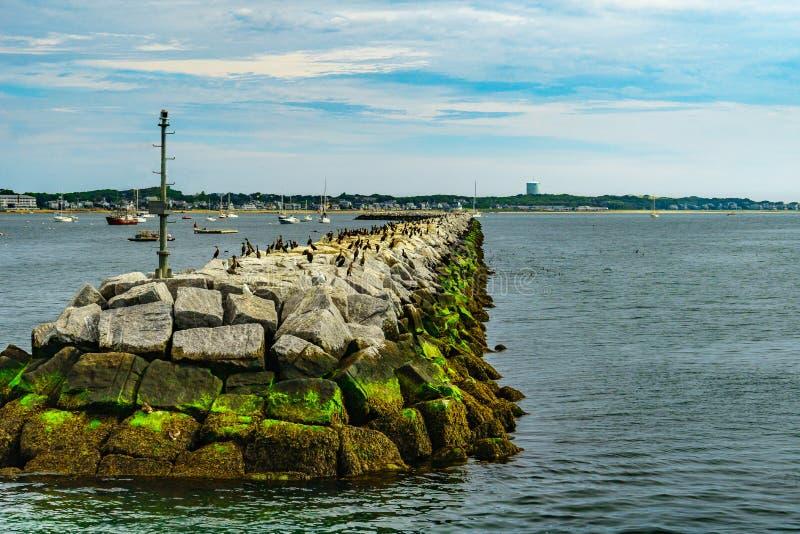 Provincetown小游艇船坞防堤鸟Provincetown MA美国 Provincetown MA美国 免版税库存照片