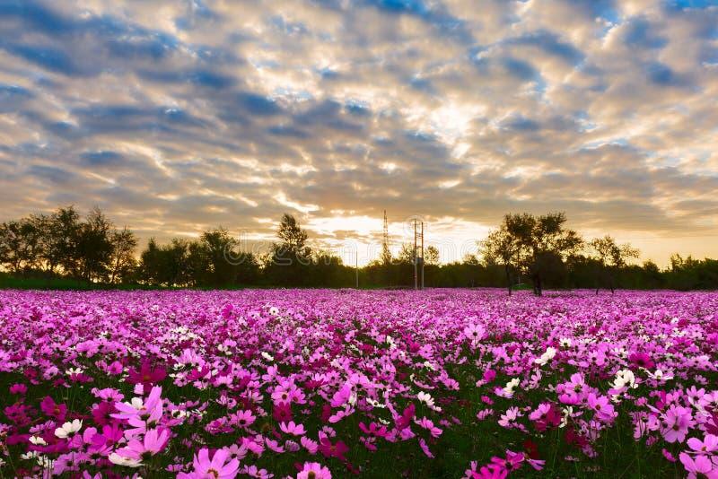 La mattina del giardino fotografie stock libere da diritti