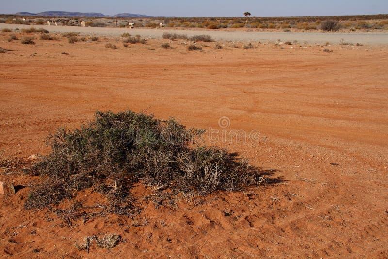 Provinz Landschaft-Namaqualand Nordkap von Südafrika stockfotos