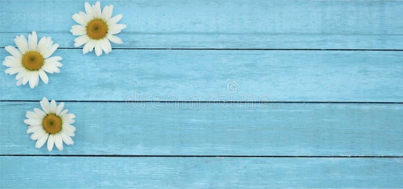 Provision-photo-été-fond-en bois-bannière-de-fleurs image stock