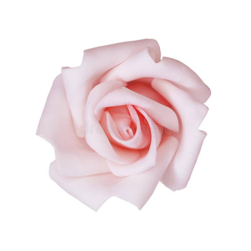 Provision-photo-rose-fleur-rose-couleur-isoler-sur-le-blanc-fond image stock