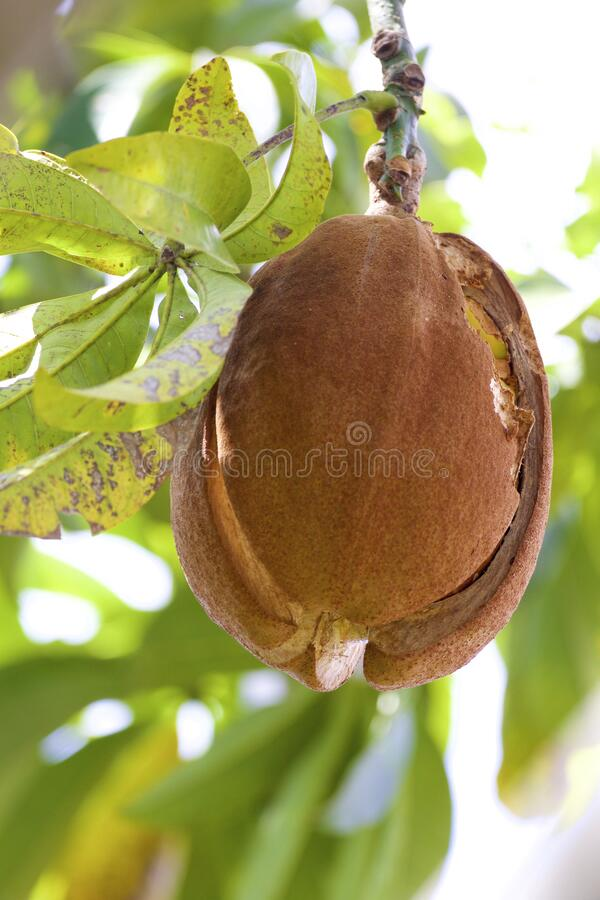 Provision Tree Fruit  837972 stock photos