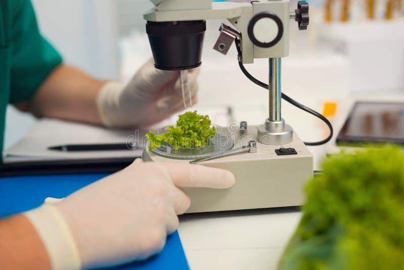 Provning av genetiskt ändrad mat i laboratoriumet royaltyfri bild